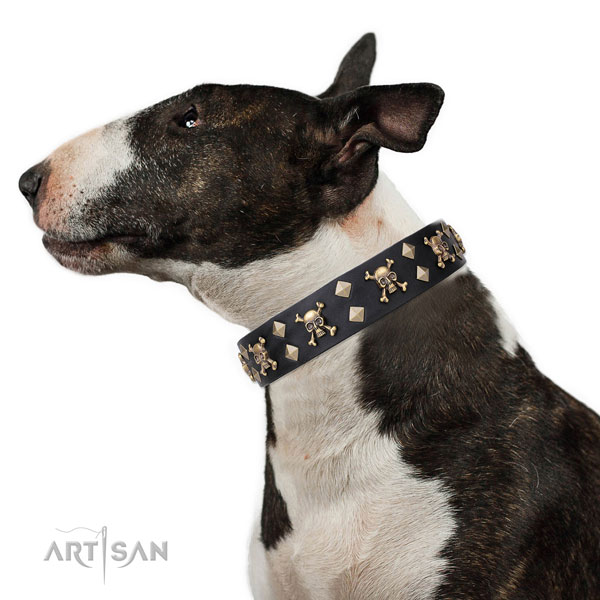 English Bull Terrier stylish design full grain natural leather dog collar for comfortable wearing