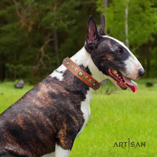 English Bull Terrier top quality natural leather collar with rust-proof buckle
