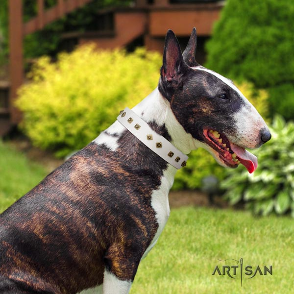 English Bull Terrier exquisite natural leather collar with corrosion resistant d-ring