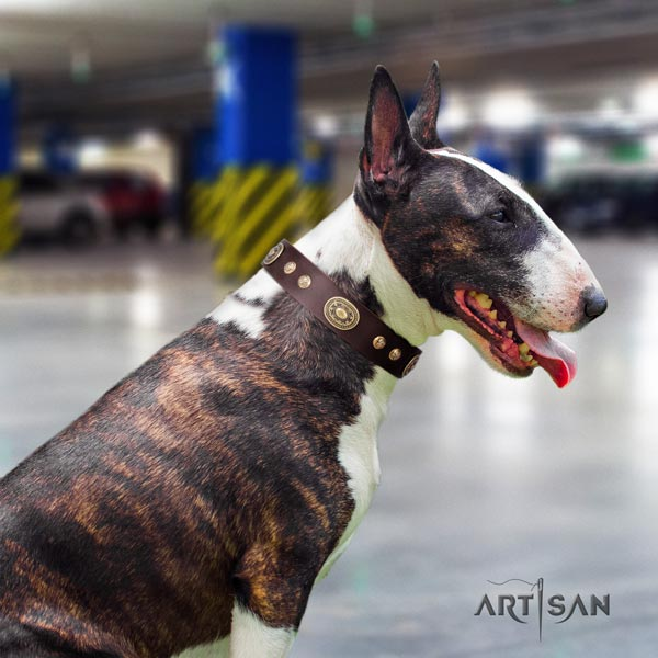 English Bull Terrier impressive full grain natural leather collar with rust-proof fittings