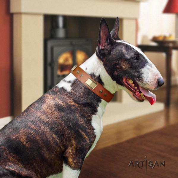 English Bull Terrier extraordinary full grain genuine leather collar with rust-proof buckle