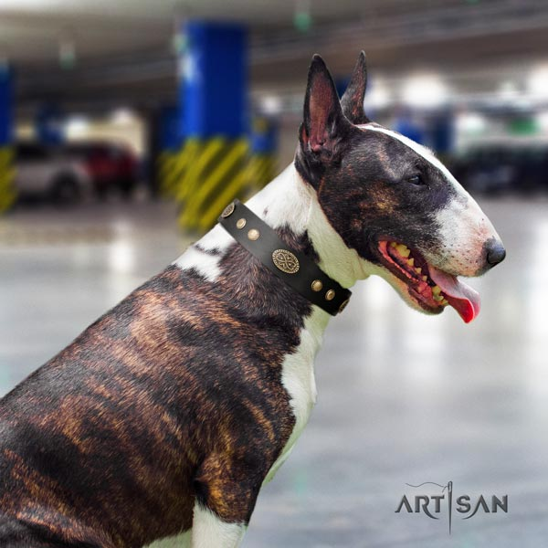 English Bull Terrier exquisite natural leather collar with rust-proof fittings