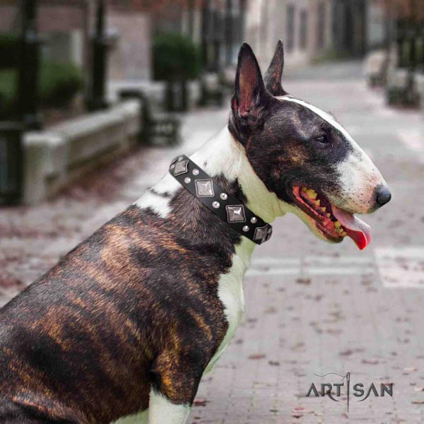 English Bull Terrier best quality full grain natural leather collar with corrosion proof hardware