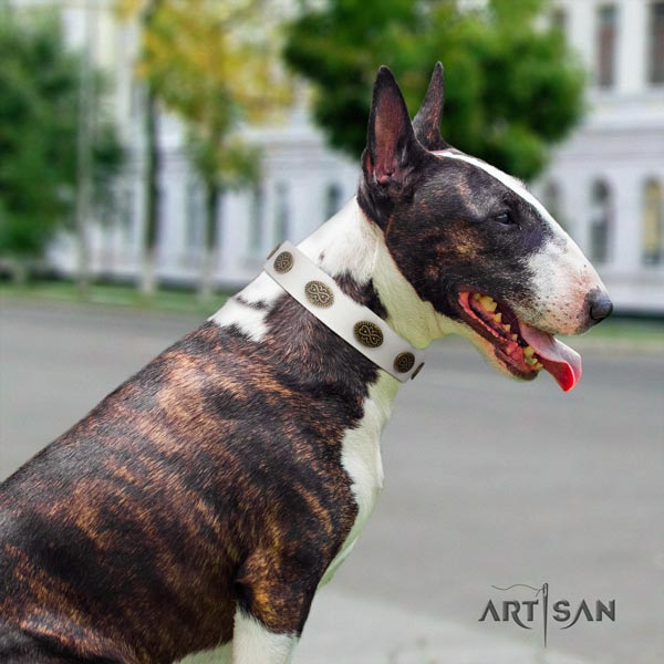 English Bull Terrier stunning full grain natural leather collar with corrosion resistant fittings