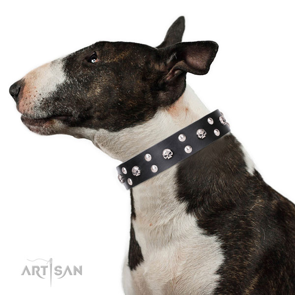 English Bull Terrier decorated natural genuine leather dog collar for fancy walking