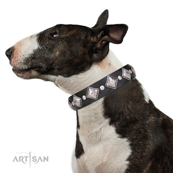 English Bull Terrier studded natural genuine leather dog collar for handy use