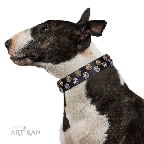 English Bull Terrier adorned full grain leather dog collar for everyday use