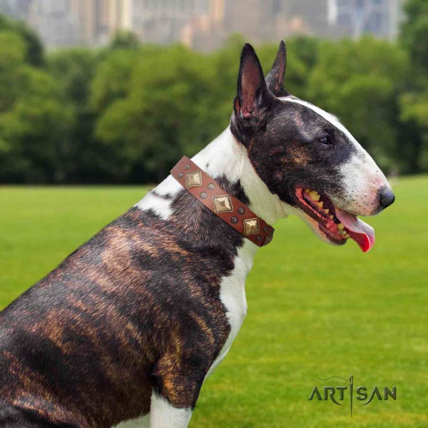 English Bull Terrier exceptional full grain leather collar with corrosion proof buckle