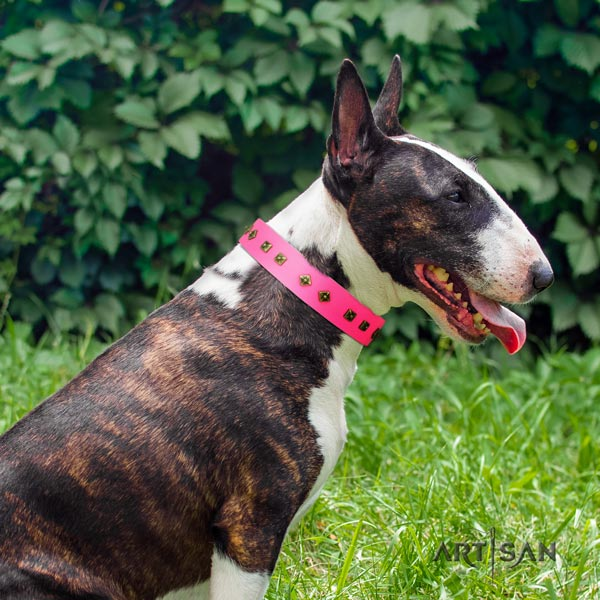 English Bull Terrier extraordinary genuine leather collar with rust resistant fittings