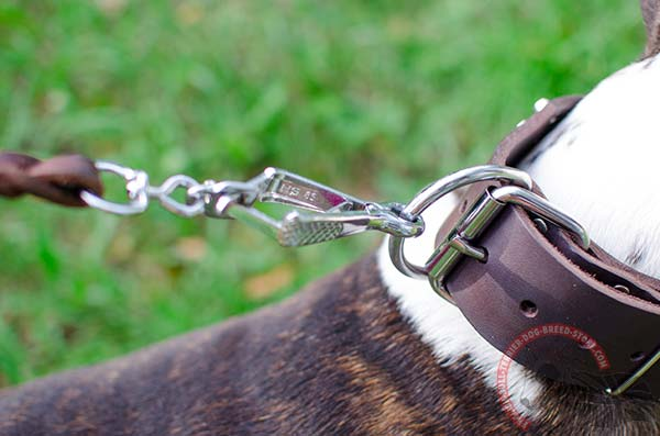 Leather English Bullterrier Collar with Strong D-Ring