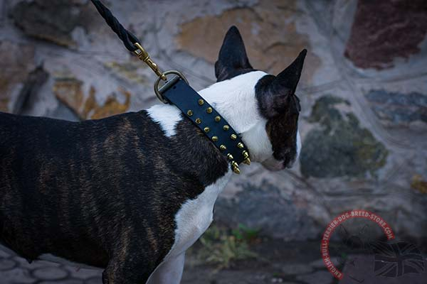 English Bullterrier black leather collar with reliable brass plated hardware for basic training