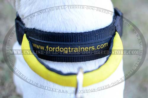Fast Grab Round Handle of All Weather Nylon Dog Collar