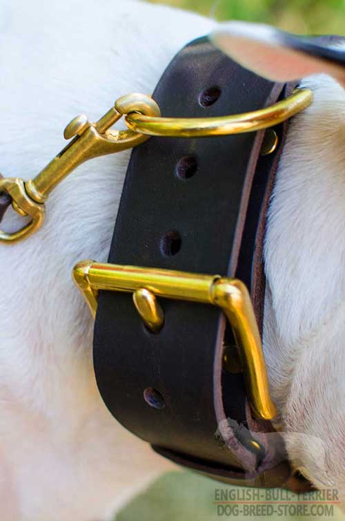 Brass Hardware On Extra Wide Spiked Leather Dog Collar