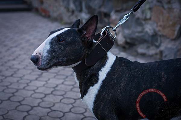 Simple design leather English Bull Terrier collar for everyday walking and training