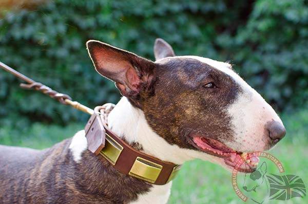 Natural Leather English Bullterrier collar