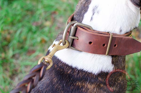 Buckled Leather English Bullterrier Collar