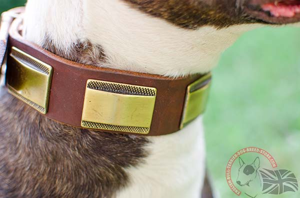 English Bullterrier collar with brass Plates