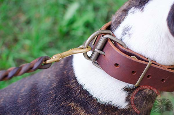 Decorated leather English Bullterrier collar with brass hardware