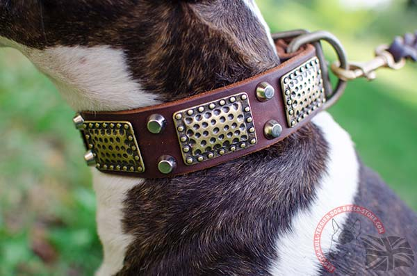 Amazing English Bullterrier collar with massive plates and nickel pyramids