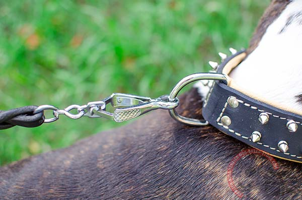 Leather English Bullterrier collar with nickel fittings for walks