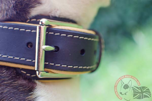 Decorated English Bullterrier collar with rust proof hardware