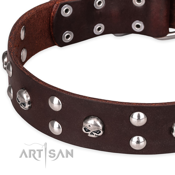 Everyday leather dog collar with fashionable embellishments