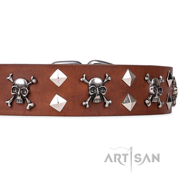 Daily leather dog collar with remarkable decorations
