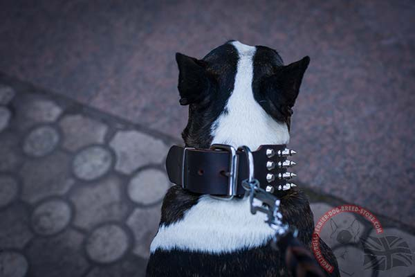 Strong English Bullterrier Collar with Buckle for Easy Fixation