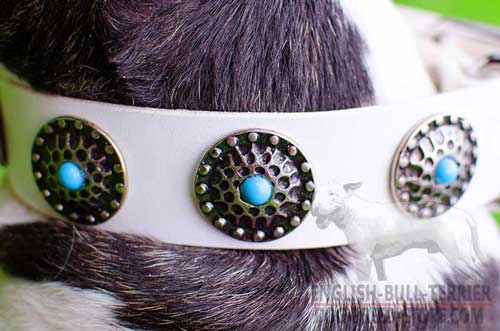 Decorative Nickel Circles on Fabulous White Leather Dog Collar