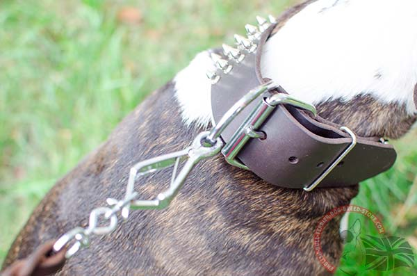 Buckled Leather English Bullterrier Collar with Spikes