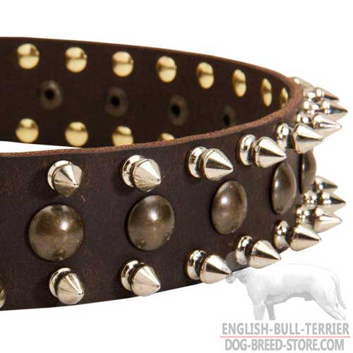 Brass Studs and Spikes on Leather Bull Terrier Collar