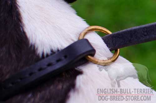 Solid Brass O-Ring on Leather Dog Choke Collar for Lead Attachment