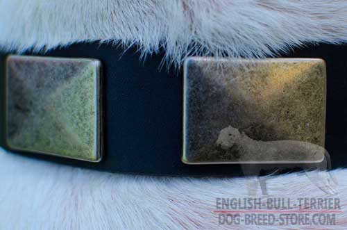Vintage Look Rusted Nickel Plates on Walking Leather Dog Collar