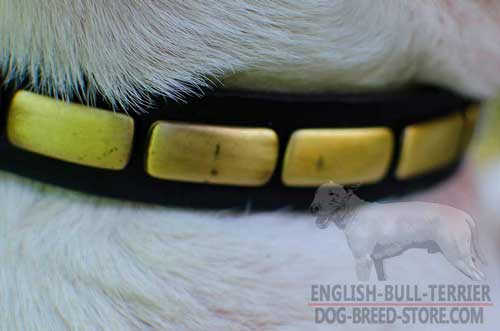 Plates on Leather Bull Terrier Collar for Walking