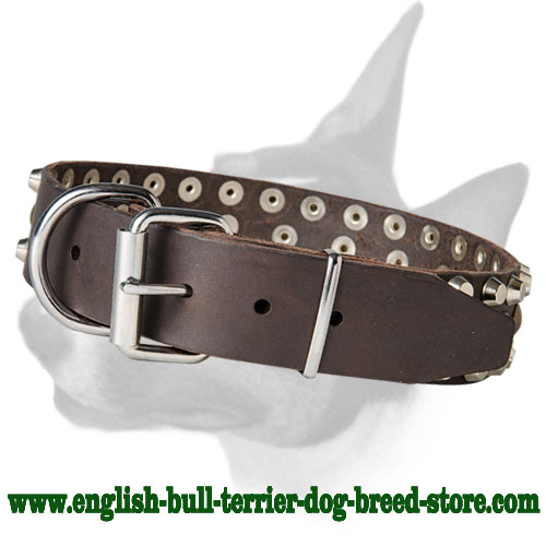 Dog Collar with Strong Buckle for English Bull Terriers