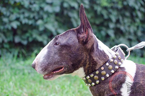 Top Quality Leather English Bullterrier Collar