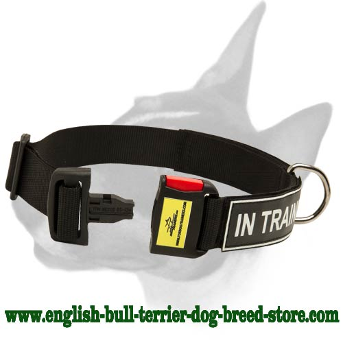 English Bull Terrier Dog Collar for Walking