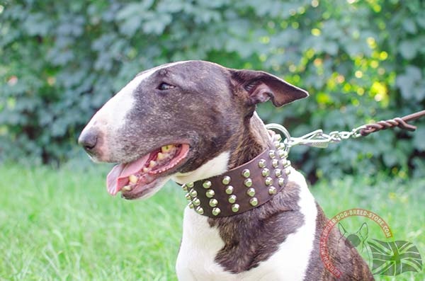 Extra Strong English Bullterrier Collar with Pyramids