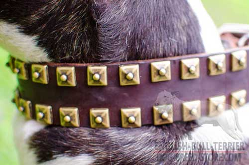 Riveted Brass Studs On Wide Leather Dog Collar