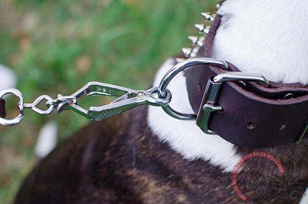 Leather English Bullterrier Collar with Nickel Plated Buckle