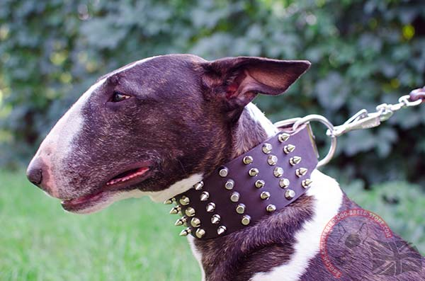 English Bullterrier Collar with Amazing Decorations