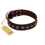 """Boundless Energy"" Premium Quality FDT Artisan Brown Designer Leather English Bull Terrier Collar with Small Pyramids"