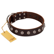 """Lucky Silver"" Designer Handmade FDT Artisan Brown Leather English Bull Terrier Collar"