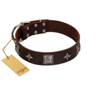 """Cold Star"" Designer FDT Artisan Brown Leather English Bull Terrier Collar with Silver-Like Adornments"