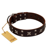 """Bigwig Woof"" FDT Artisan Brown Leather English Bull Terrier Collar with Chrome Plated Stars and Square Studs"