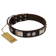 """Baller Status"" FDT Artisan Brown Leather English Bull Terrier Collar Adorned with a Set of Chrome Plated Studs and Plates"