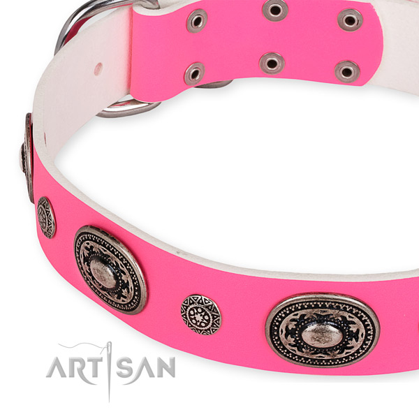 Genuine leather dog collar with amazing rust resistant embellishments