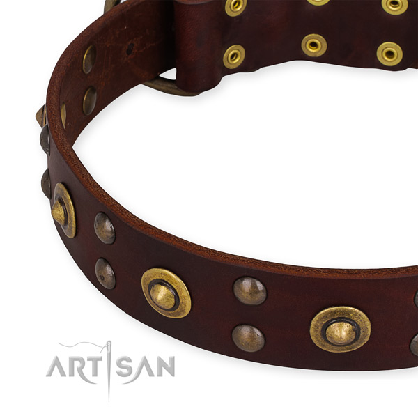 Leather collar with durable traditional buckle for your stylish dog