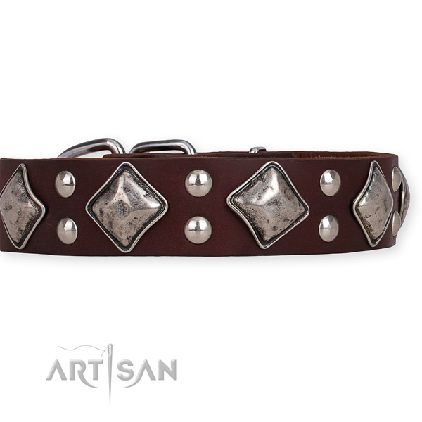 Genuine leather dog collar with awesome rust resistant studs