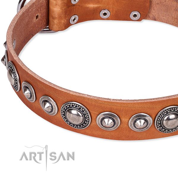 Stylish walking embellished dog collar of durable full grain leather